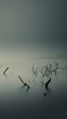 ↑↑TAP AND GET THE FREE APP! Nature Gloomy Dark Grey Mystic Branches Strange Beautiful Mist HD iPhone 5 Wallpaper