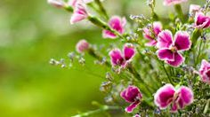 Image result for images of nature and flowers