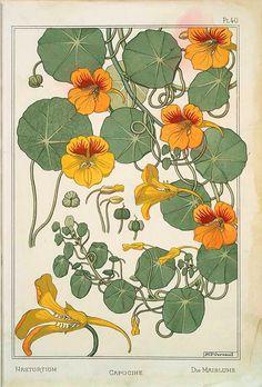 Nasturtium - Maurice Pillard Verneuil (1869-1942 France)