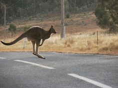 australia outback images - Google Search
