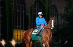 """california chrome groom  