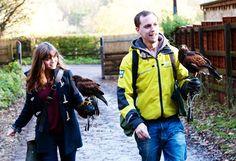 Hawk walk near Bath