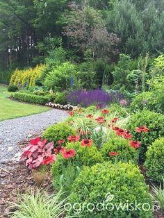 Roztoczańskie klimaty - strona 685 - Forum ogrodnicze - Ogrodowisko