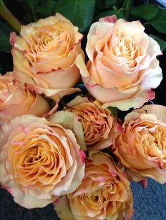 Plum Flowers, Types Of Flowers, Rose Varieties, Color Stories, Rose Bouquet, Peach Colors, Carpe Diem, Flower Arrangements, Floral Design