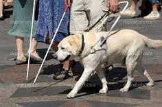 Accoglienza dei cani guida negli alberghi, la questione arriva in parlamento…