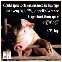 "could you look an animal in the eye and say to it, ""My appetite is more important than your suffering.?"" courtesy ~Moby  #Govegan #vegan"