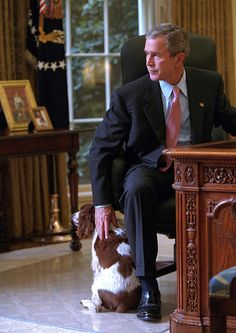 President George W. Bush petting his English Springer Spaniel Spot in the Oval Office. (Photo by Eric Draper/Mai/Mai/Time Life Pictures/Getty Images).How I miss him as our president! Greatest Presidents, American Presidents, American History, Chien Springer, Presidential History, Presidential Trivia, Presidential Portraits, Bush Family, Westerns