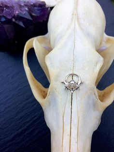 This unique septum is made out of a real vertebrae (cruelty free*) that has been molded and casted into 925 Silver. I then proceed to plating it in Face Jewellery, Septum Jewelry, Septum Ring, Face Piercings, Peircings, Body Mods, Diamond Are A Girls Best Friend, Ring Earrings, Body Art
