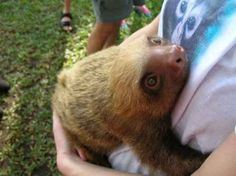 Rescued sloth showing his gratitude - Imgur