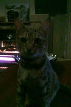 Tiggy :)