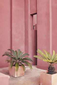 Pink & palms.