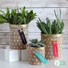 Create a rustic thank you gift container with supplies you already have around the house - check out these beautiful burlap succulent planters!