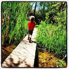 Hassayampa River Preserve in Wickenburg. The perfect place for kids and grown ups to explore nature. http://www.nature.org/ourinitiatives/regions/northamerica/unitedstates/arizona/placesweprotect/hassayampa-river-preserve.xml