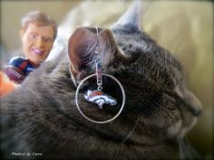 Dreaming of a #Bronco #SuperBowl2014 win with #BubbaTheCat