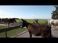 """WUNDERSCHÖNER BEITRAG: """"Unsere geretteten Tiere werden gemeinsam mit uns älter"""" Alter, Austria, Germany, Horses, Animals, Road Trip Destinations, France, Bayern, Nice Asses"""