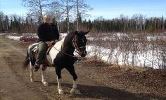 Talkeetna Horses | A horseback riding experience through the boreal forest outside of Talkeetna, Alaska