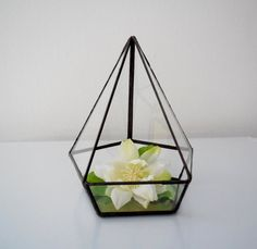 Terrarium clear glass planter modern industrial by jacquiesummer