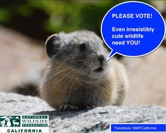 Get Ready to Cast Your Vote for Wildlife http://blog.nwf.org/2012/11/join-me-in-casting-your-vote-for-wildlife/