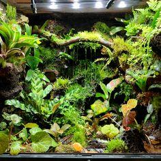 Tree Frog Terrarium, Gecko Terrarium, Reptile Terrarium, Gecko Habitat, Reptile Habitat, Reptile Room, Crested Gecko Vivarium, Snake Cages, Biotope Aquarium