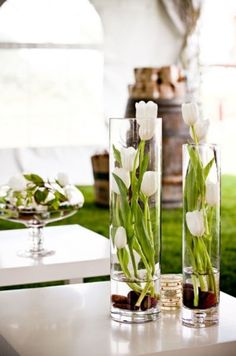 Sprouting Tulips Centerpieces, great way to keep them upright too!
