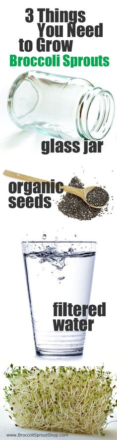 If you want to add more sulforaphane to your diet by growing broccoli sprouts at home, all you need are 3 things: a glass jar, organic broccoli sprout seeds and water. Here are tips to avoid mold...