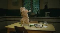 Image result for dancing cat gif
