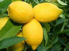15 Hidden Health Secrets of Lemons