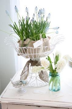 I love grapr hyacinths