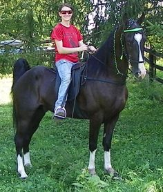 TWH on Pinterest | Tennessee Walking Horse, Tennessee and ...