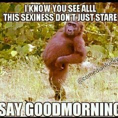 You See All This Sexiness Dont Just Stare Say Good Morning morning good morning morning quotes good morning quotes morning humor morning quote funny good morning quotes good morning quote good morning quotes for friends Good Morning Images, Good Morning Picture, Morning Pictures, Funny Good Morning Memes, Morning Humor, Morning Morning, Morning Sayings, Morning Texts, Wednesday Morning