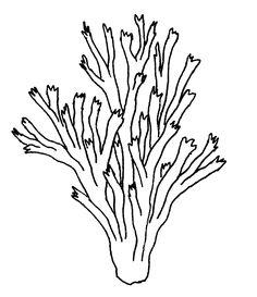 seaweed and coral coloring pages | 10 Best Coral reef drawing images | Coral reef drawing ...