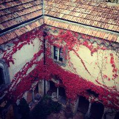 Le foglie ed i rampicanti di Villa Cimbrone #Ravello [Segui i nostri spostamenti su #Instagram: http://instagram.com/allyoucanitaly]