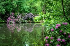 Grosser Tiergarten in Berlin, a lush escape in the middle of the bustling city.