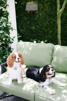 Cavalier King Charles Spaniels / Charleston Tea Party / Photo by Olivia Rae James