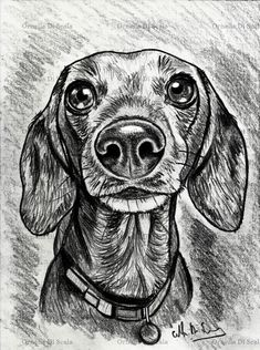 The 14 Nicest Dachshund Paintings Dog Pencil Drawing, Dachshund Drawing, Pencil Portrait Drawing, Pencil Drawing Tutorials, Dachshund Art, Pencil Drawings, Dapple Dachshund, Dachshund Puppies, Chihuahua Dogs