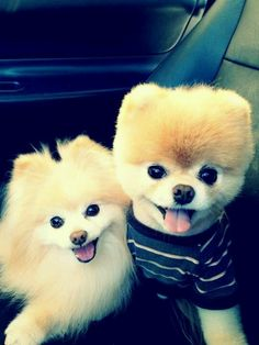 the great family called 2 cute dogs!!!!!!!!!!!!!!!!!!!!!!!!!!!!!!!!!!!!!!!!!!!!!!!!!!!!!!!!!!!!!!!!!!!!!!!!!!!!!!!!!!!!!!!!!!!!!!!!! .......................EVER!!!!!!!!!!!!