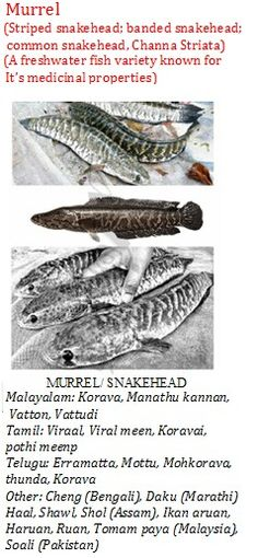 81 Best ☆ Fish Glossary ☆ images in 2016 | Fish, Meat, Dog