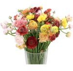 Get the extensive assortmnet of wholesale fresh cut summer flowers from Whole Blossoms at best prices. Fresh cut summer wedding flowers are available for diy brides. Free shipping on all summner flowers orders.  For more information visit : http://www.wholeblossoms.com/seasonal-flowers/summer-flowers.html