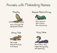 Twitter / ClaireRPorter: Animals with misleading names: ...