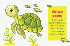 Want to teach your kid about sea turtles? Here're 25 amazing Sea Turtle facts for Kids. Read on the information and help your child to know more about this creature.