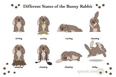 Bunny Behavior...pooping is not it's own category because they poop continuously, luckily its really easy to clean up