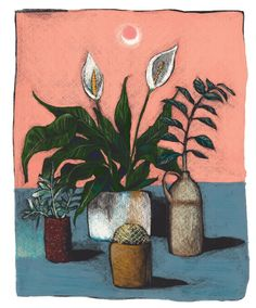 KERO | illustrations - — Plants