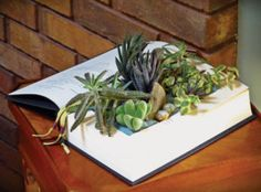 Planted book activity from Indoor Plant Decor by Kylee Baumle and Jenny Peterson