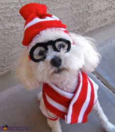 Woof! Where's Waldo - Halloween Costume Contest via @costumeworks