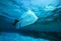 plastic bag - Google 검색