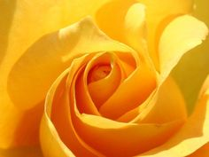 Shades Of Yellow, Yellow Roses, Things To Come, Joyful, Beautiful Things, Blog, Inspiration, Style, Yellow