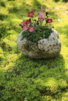 A page Hypertufa PDF eBook. Everything to make all your Hypertufa projects a success. Ikebana, Container Plants, Container Gardening, Beautiful Gardens, Beautiful Flowers, Plantation, Garden Planters, Cement Garden, Weed