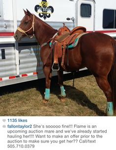 Ahh I want this horse Barrel Racing Saddles, Barrel Racing Horses, Barrel Horse, Barrel Saddle, Saddle Rack, Cute Horses, Beautiful Horses, Cute Horse Pictures, Horse Photos