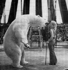 "Did you know that polar bears have a history of being circus bears? Ursula Böttcher is the most well-known bear circus trainer. Her favorite bear, ""Alaska,"" was trained to kiss her at the end of the act"