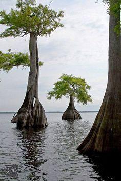 Blue Cypress Lake near Vero Beach FL. Great freshwater fishing. Birdwatching and other FL critters.